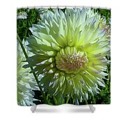 Yellow With White Dahlia Flower Shower Curtain