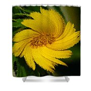 Yellow Wonder Shower Curtain
