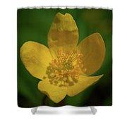 Yellow Wood Anemone 1 Shower Curtain