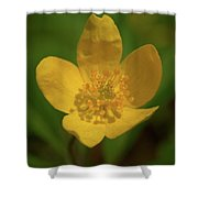 Yellow Wood Anemone 2 Shower Curtain