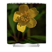 Yellow Wood Anemone 3 Shower Curtain