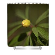 Yellow Wood Anemone 4 Shower Curtain