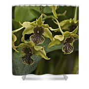 Yellowish Orchids Shower Curtain