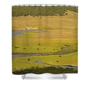 Yellowstone Bison 2 Shower Curtain