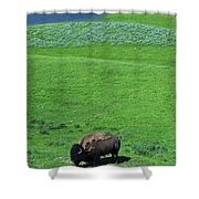 Yellowstone Bison  Shower Curtain