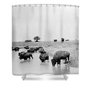 Yellowstone: Bison, C1905 Shower Curtain