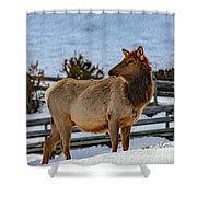 Yellowstone Elk Shower Curtain