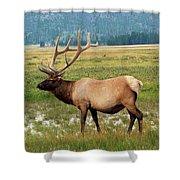 Yellowstone Elk Shower Curtain