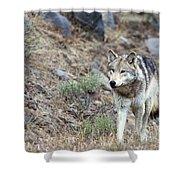 Yellowstone Grey Wolf Shower Curtain