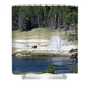 Yellowstone Park Bison In August Shower Curtain