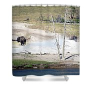 Yellowstone Park Bisons In August Shower Curtain