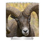 Yellowstone Ram Shower Curtain