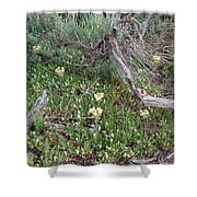Yellowstone Renewal From Fire Shower Curtain
