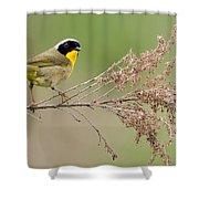 Yellowthroat Warbler Shower Curtain