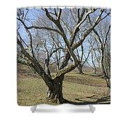 Yellowwood Tree In Winter Shower Curtain