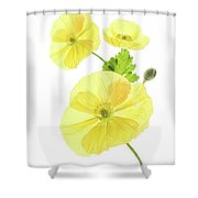 Beauty And Translucency Of Poppies. Shower Curtain