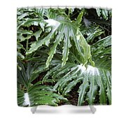 Yes Snow In Florida Shower Curtain