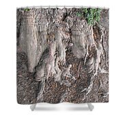 Yew Tree Roots Shower Curtain
