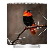 Yikes Spikes - Red Bishop Weaver Bird Shower Curtain