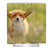 Yoda - Funny Fox Shower Curtain