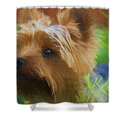 Yorkie In The Grass - Painting Shower Curtain