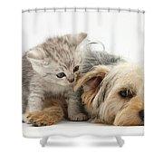 Yorkshire Terrier And Tabby Kitten Shower Curtain