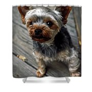 Yorkshire Terrier Puppy Shower Curtain