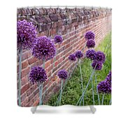 Yorktown Onions Along The Wall Shower Curtain