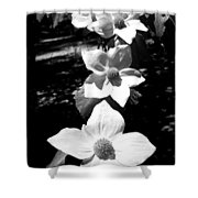 Yosemite Dogwoods Black And White Shower Curtain