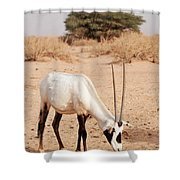 Yotvata Hai-bar Reserve Shower Curtain