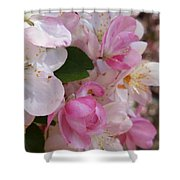You Cant Be Crabby In Spring Shower Curtain