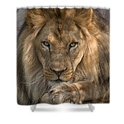 You Got My Attention Shower Curtain