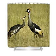 You Must Be My Mother Shower Curtain