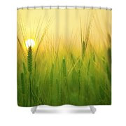 You'll Remember Me When The West Wind Moves Upon The Fields Of Barley Shower Curtain