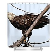 Young Adult Eagle Shower Curtain