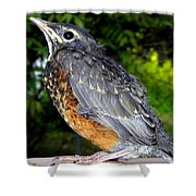 Young American Robin Shower Curtain