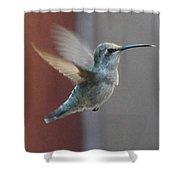Young Anna's Hummingbird In Flight Shower Curtain
