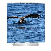 Young Bald Eagle I Shower Curtain
