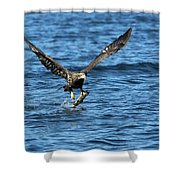 Young Bald Eagle II Shower Curtain