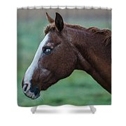 Young Blind Horse In The Rain Shower Curtain