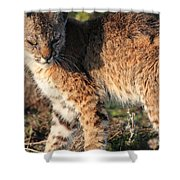 Young Bobcat 01 Shower Curtain