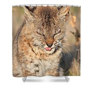 Young Bobcat 02 Shower Curtain