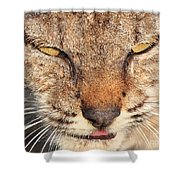 Young Bobcat Portrait 01 Shower Curtain