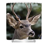 Young Buck Shower Curtain