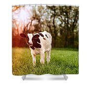 Young Calf Shower Curtain