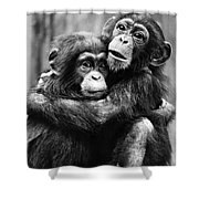 Young Chimpanzees Shower Curtain