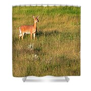 Young Deer Shower Curtain