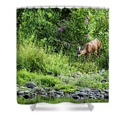 Young Doe Among The Flora, No. 2 Shower Curtain