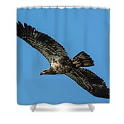 Young Eagle Color Shower Curtain