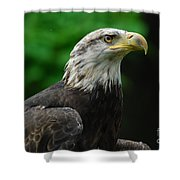 Young Eagle Shower Curtain